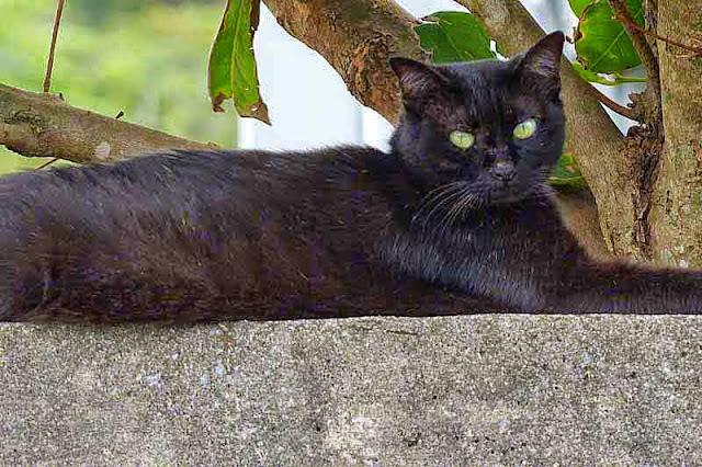 black cat, wall