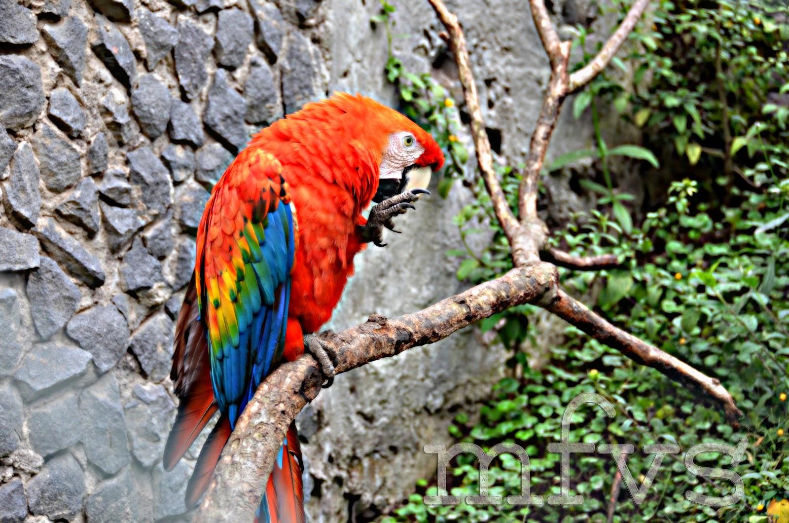 Imagenes De Baños Ambato:SUEÑOS EN IMÁGENES: Baños, Ambato, Zoo