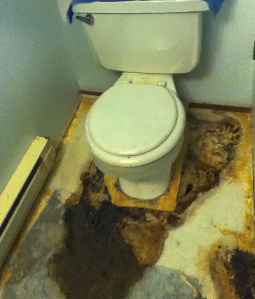 Mold Growing In Bathroom - Chaetomium fungi growing in my bathroom