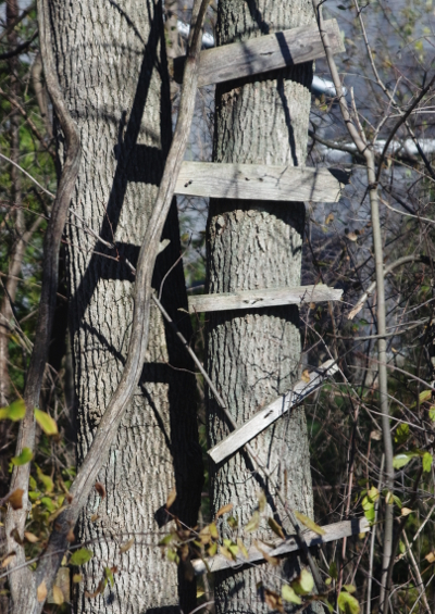 Ladder photo - copyright 2014 Jerry E Reed
