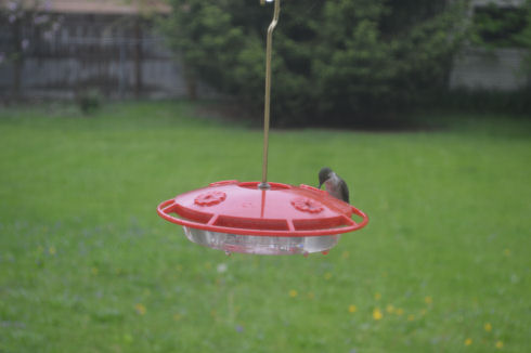 How to Feed Hummingbirds | seriously-lovely.blogspot.com