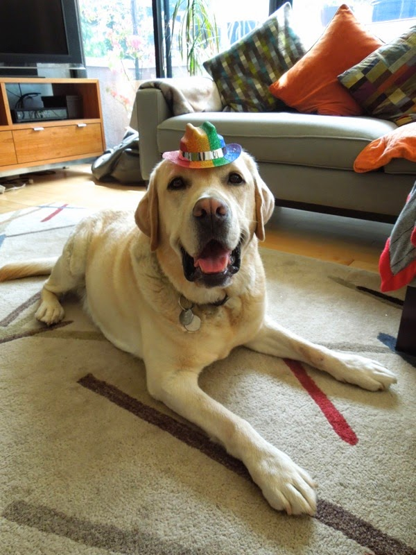 Labrador Cooper 6th Birthday