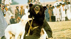 WSPA - Bears