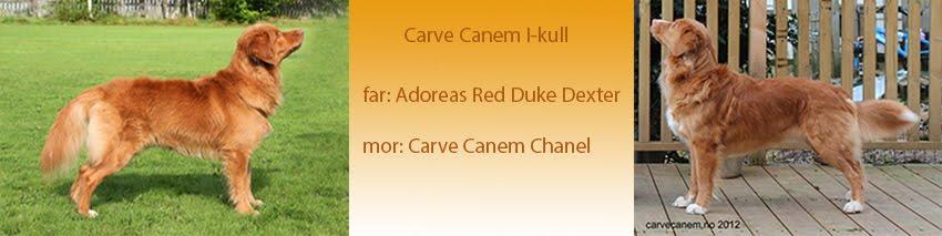 Carve Canem I-kull