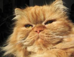 My Cat Won T Eat The Thyroid Cat Food