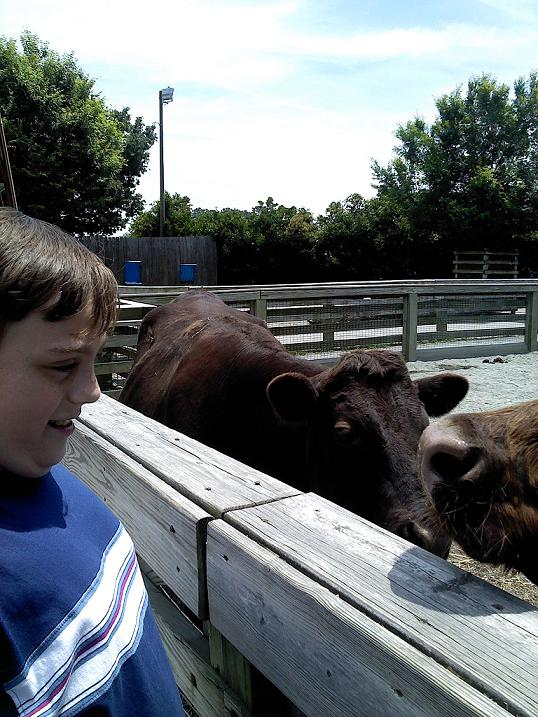 Lukey and the cows