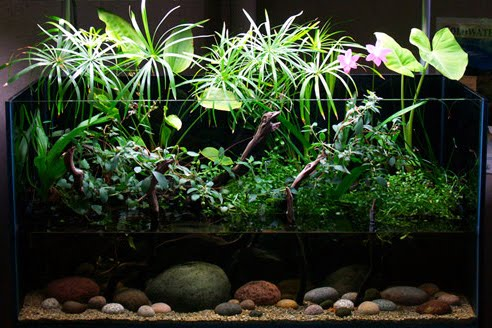 Dutch Planted Aquarium Aquascaping Rules Techniques