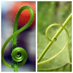 La clave está en la naturaleza