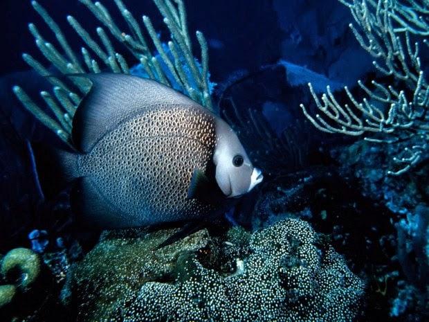 Album hình ảnh đẹp: Các loài động vật sống dưới nước