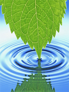 Water+leaf+HD+animated+style