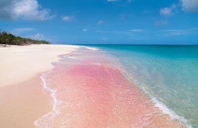 pink sand beach antigua barbuda