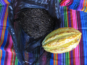 Cocoa and Cardamom
