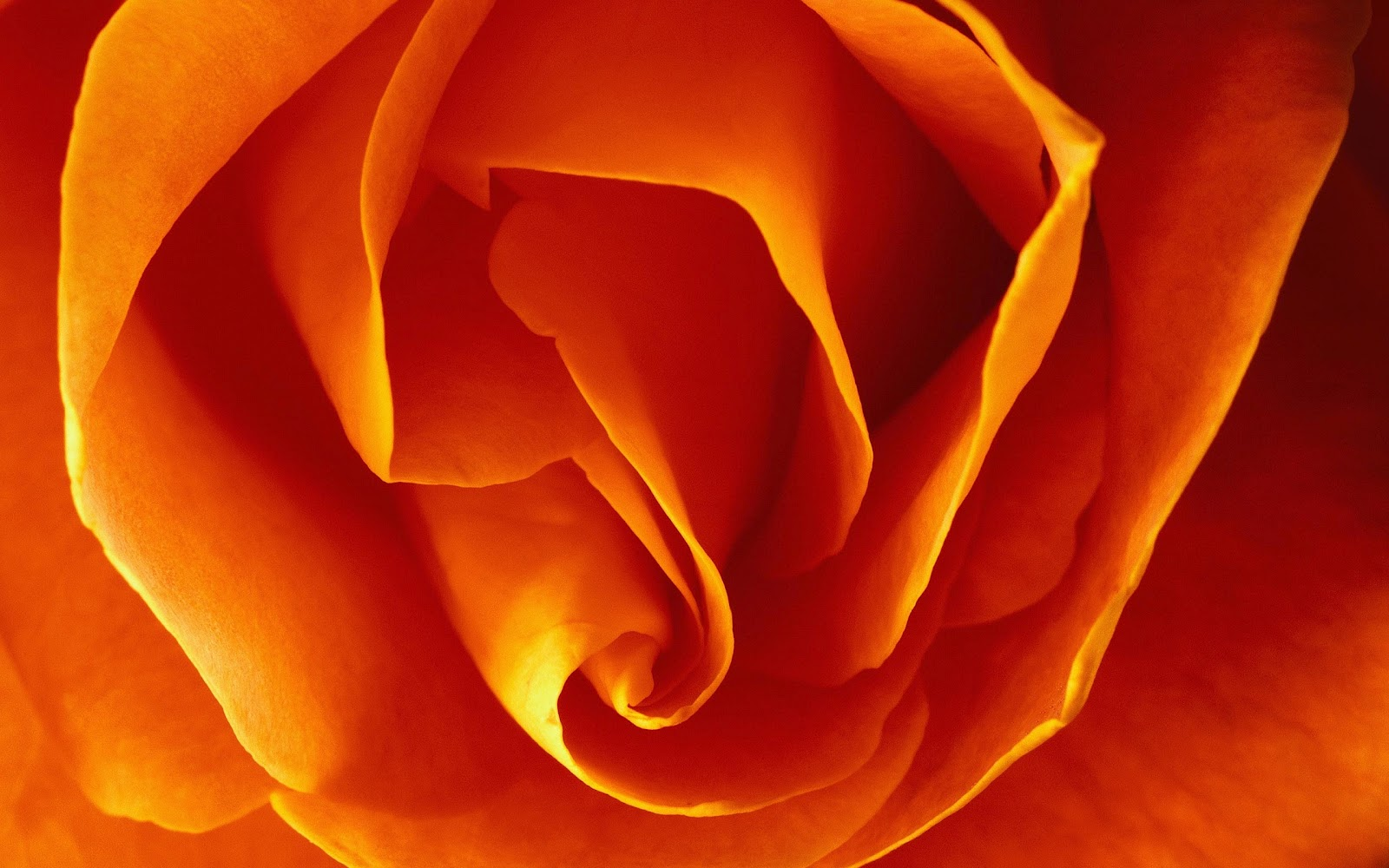 Living Life Creatively: Pantone Spring Trend: Tangerine Tango