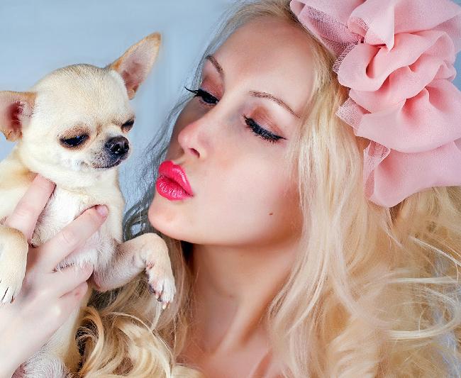 Psy rasy Chihuahua