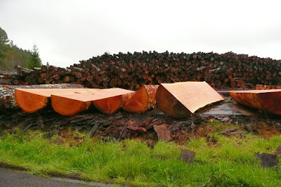 Oregon, Lane County, Logs, Logging, Forest, Coast Range