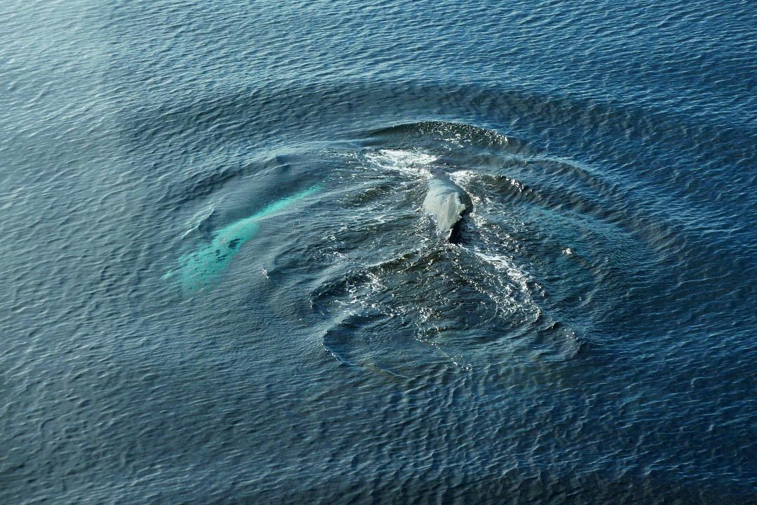 titanic bodies underwater wwwpixsharkcom images