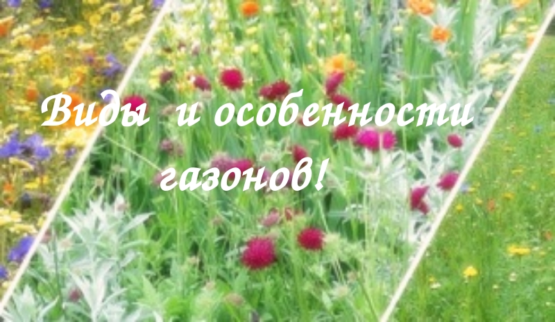 Арахис земляной орех в культуре  Сады Сибири