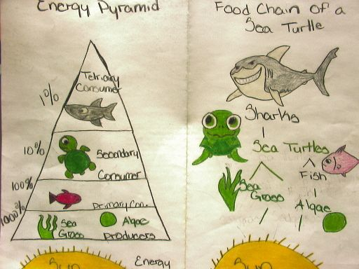 Eunishat s frog blog post 4 this week in science quot energy transfer quot