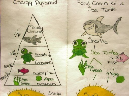What Eats A Frog In The Food Web