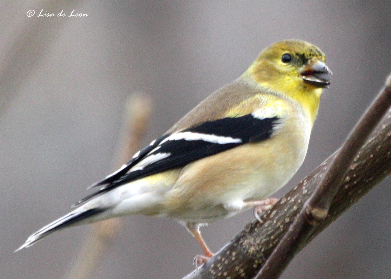 california backyard birds images reverse search