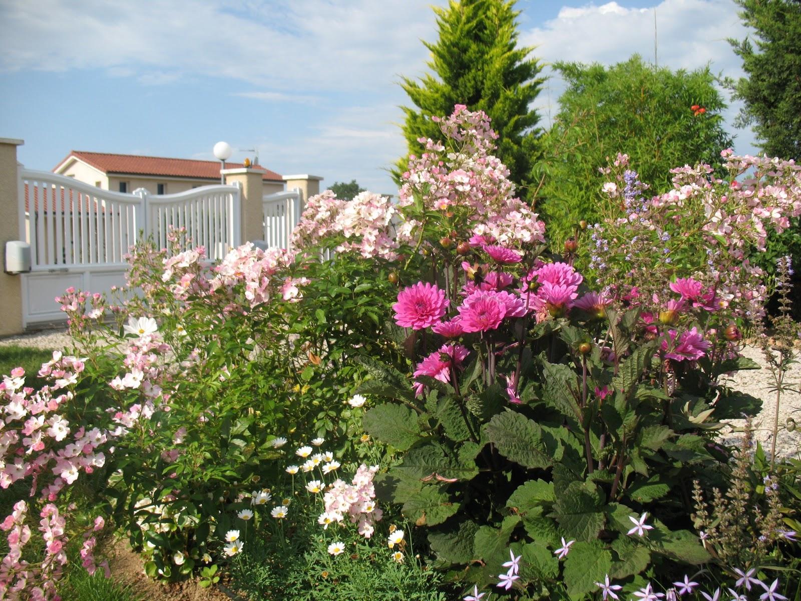 Roses du jardin ch neland dahlia blue hawa - Quand mettre du fumier de cheval dans le jardin ...