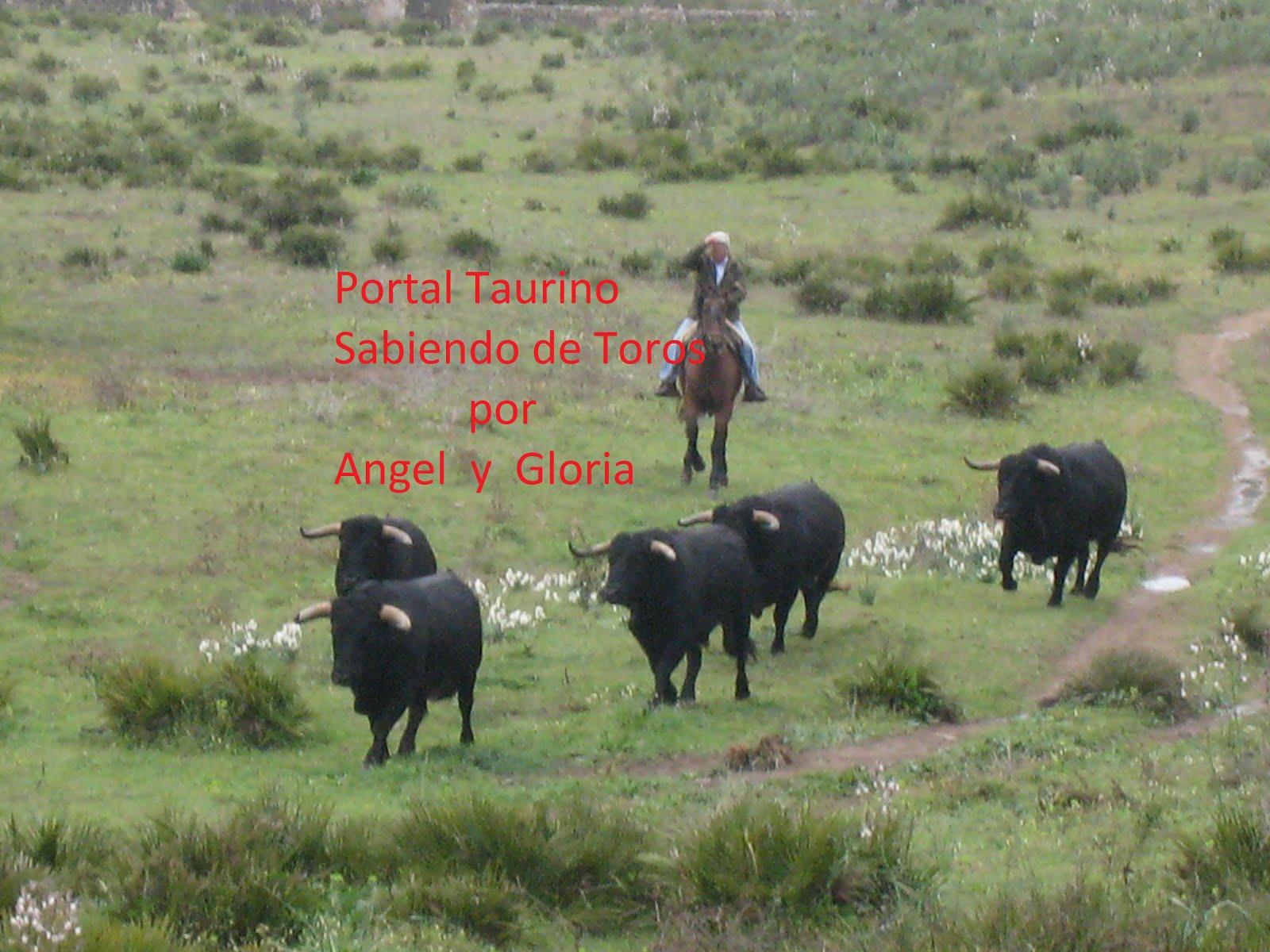 SABIENDO DE TOROS POR  ANGEL Y GLORIA