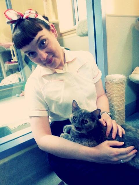 shelter cat, vintage, cat