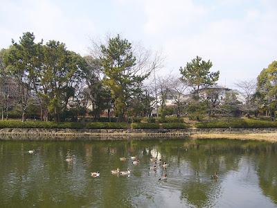 兵庫県・伊丹市 緑ヶ丘公園の水鳥