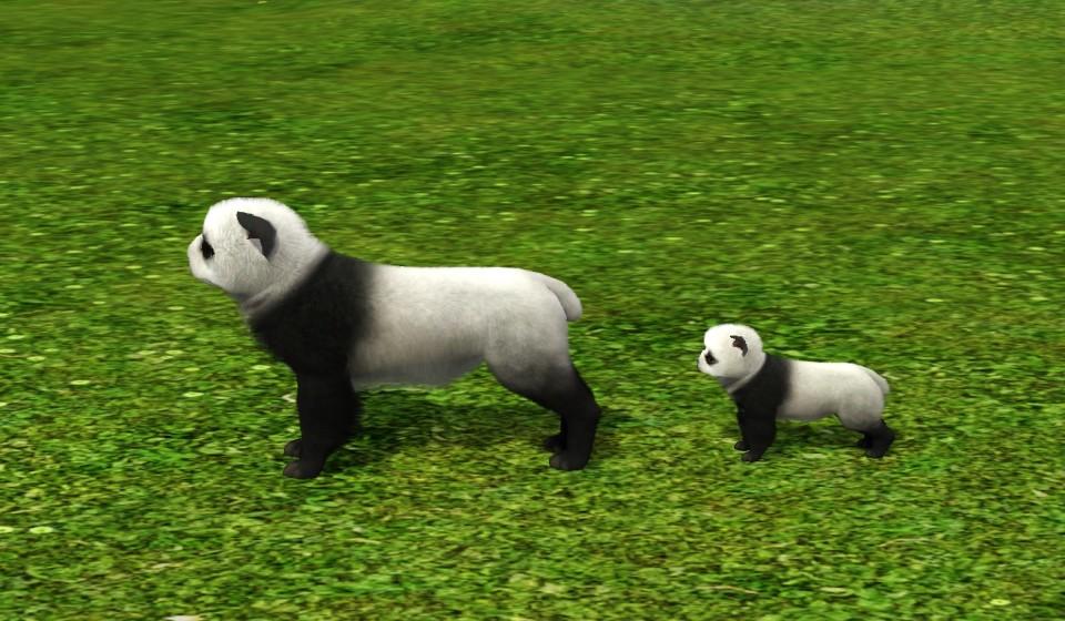 Red panda  Wikipedia