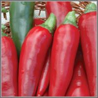Острый перец сорт «Красный толстяк»