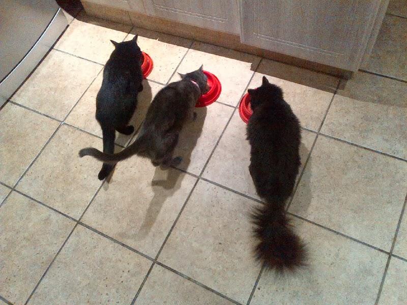 Cat Won T Eat Chicken Necks