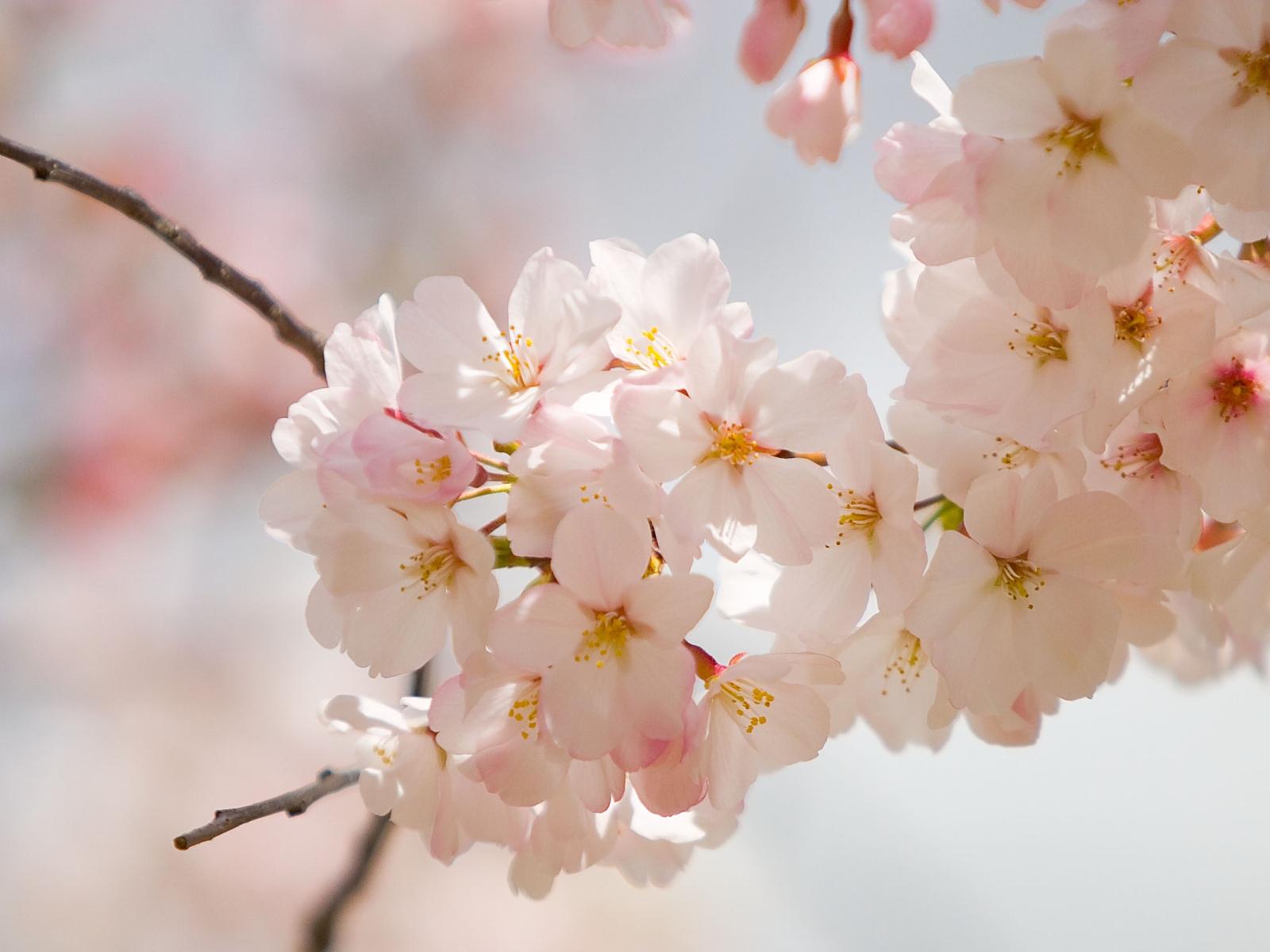 http://3.bp.blogspot.com/-D5MDEJuOWIM/T0YUjei5FaI/AAAAAAAAAuY/EkBSW84omn0/s1600/2-spring-wedding-flowers.jpg