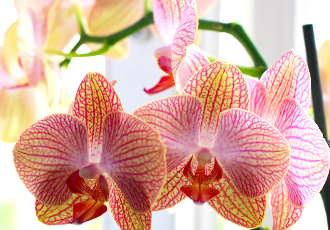 How To Care For Orchids Various Tips