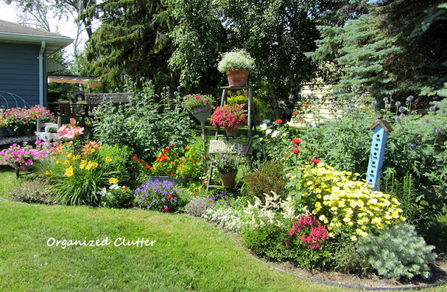 Mixed Annual & Perennial Junk Garden