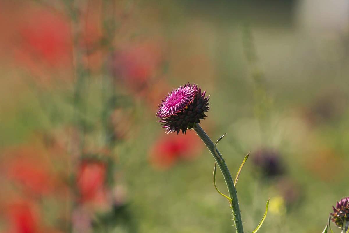 photographying spring flowers in Bulgaria, copyright Iordan Hristov