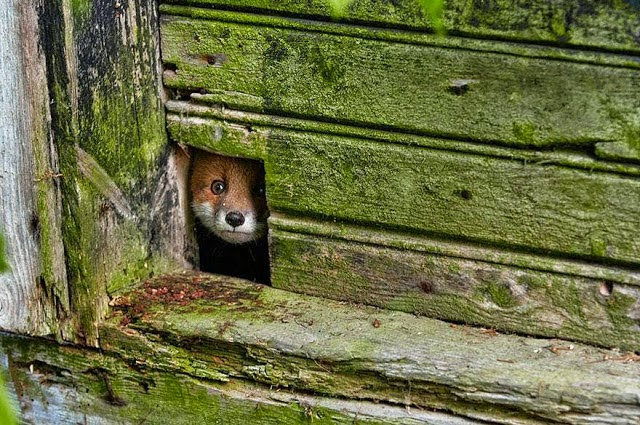 2. These 11 Photos Will Make You Fall In Love With Foxes