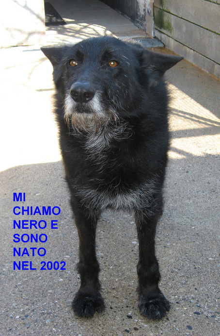 Adotta Un Cane Anziano Adottato Nero Un Cucciolo Travestito Da