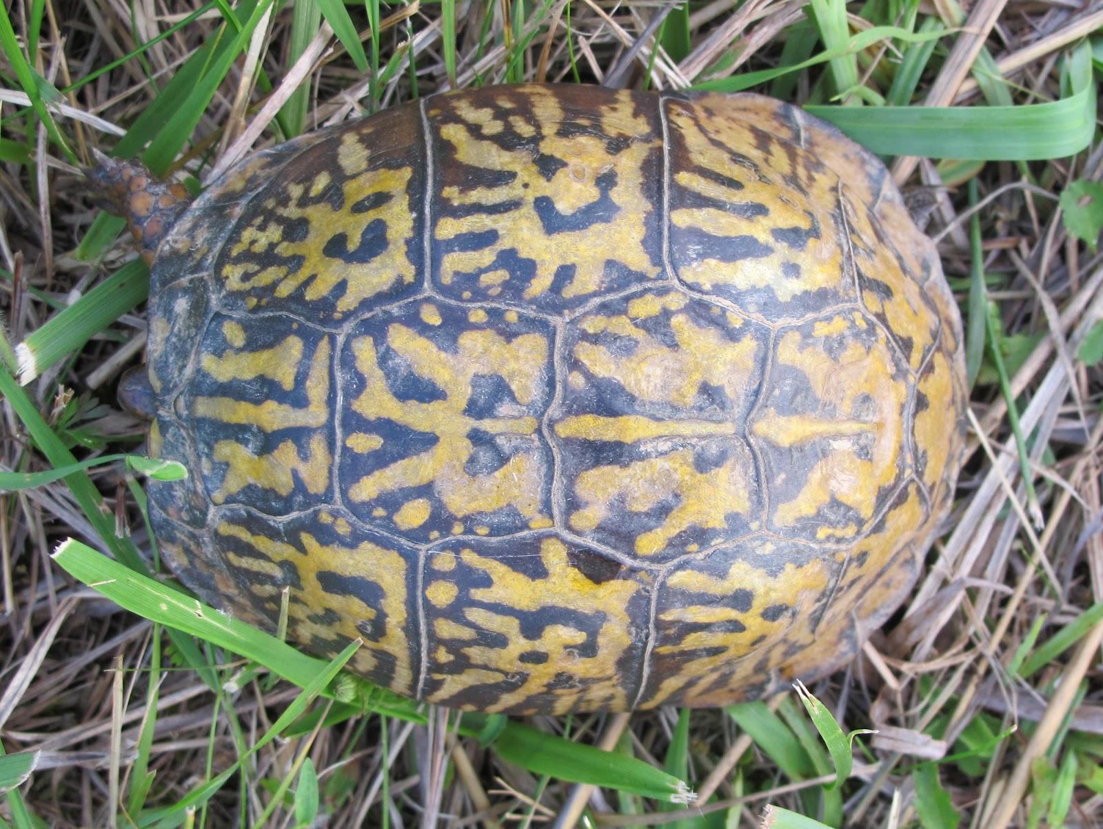 Sea Turtle Shell Pattern