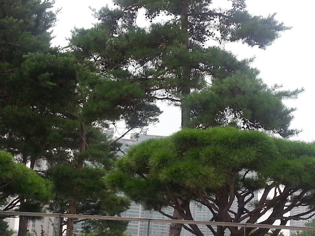 Trees and shrubs at the National museum of Korea