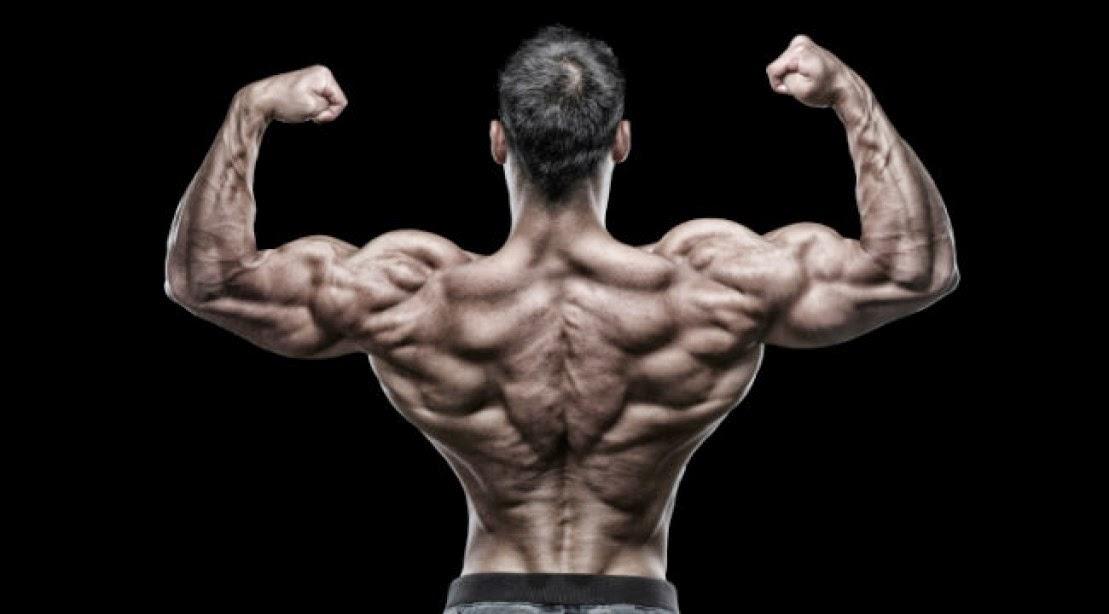 arnold schwarzenegger 7x mr olympia, Muscles