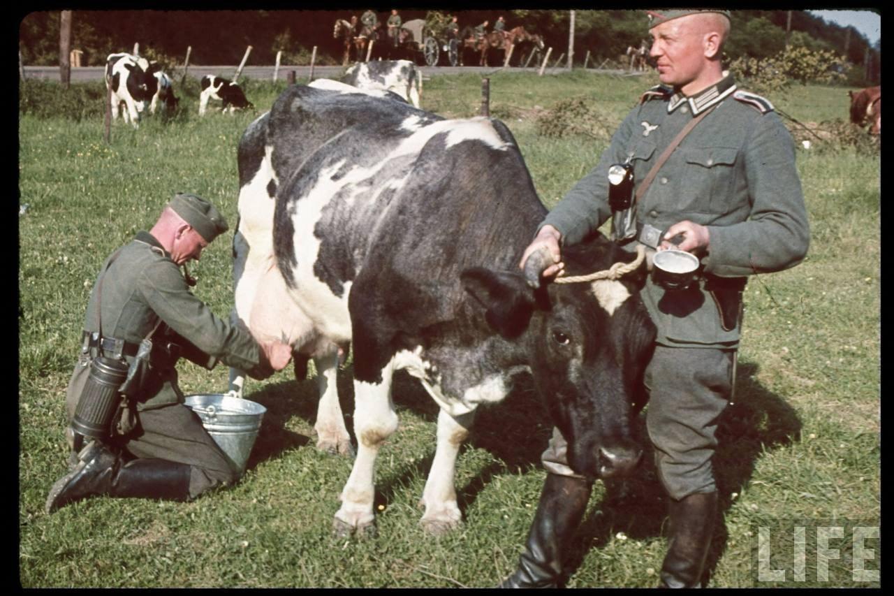 German Milking