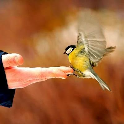 Que a sua imaginação voe como um pássaro !