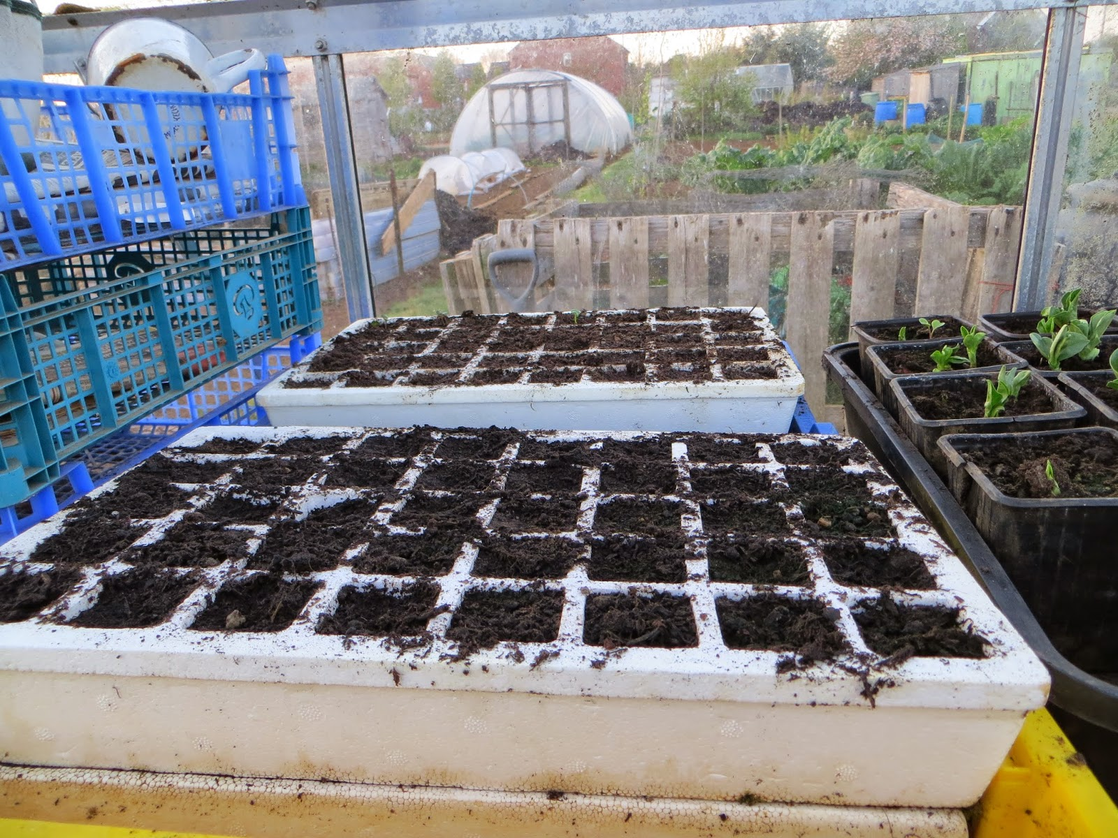 brassica self watering cells trays
