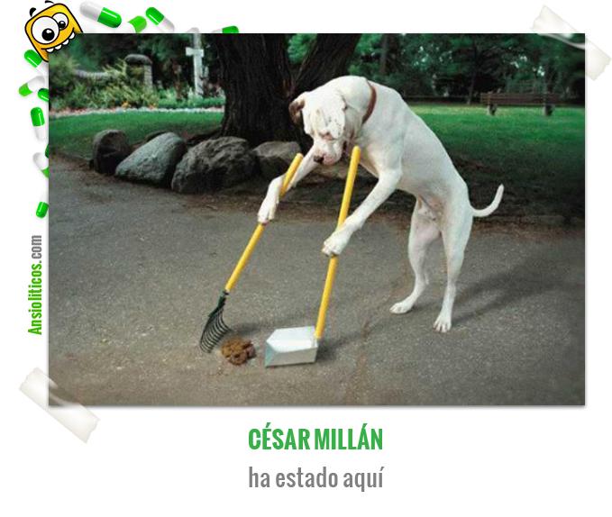 Chiste de Animales de César Millán