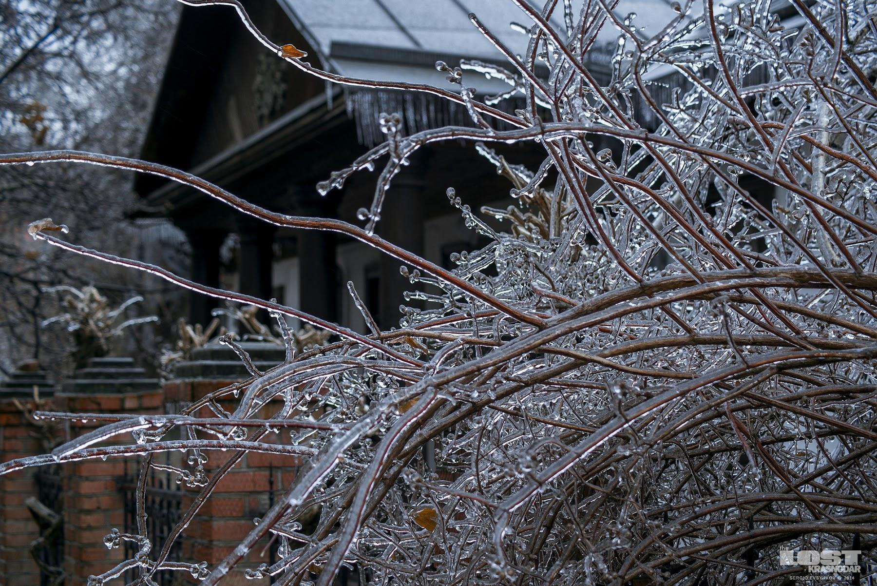 icy trees in Krasnodar
