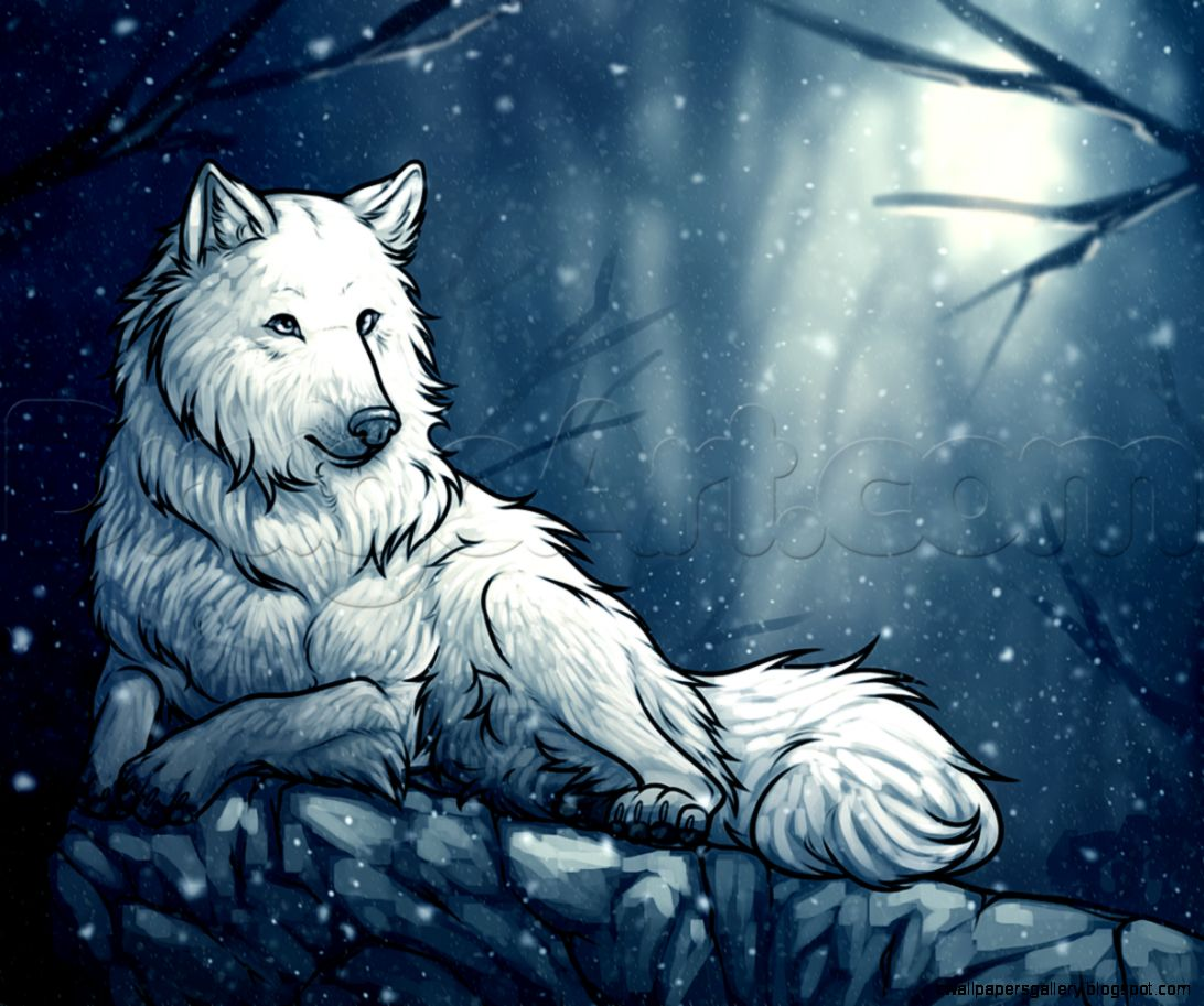 How to Draw a White Wolf Step by Step forest animals Animals