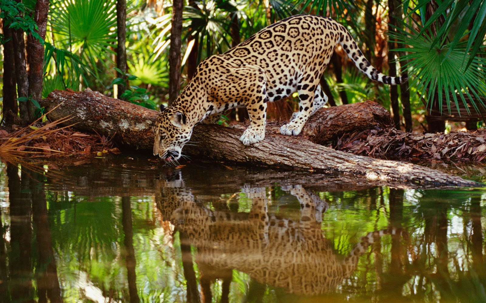 Wild Animal Wallpaper Wallpapers Pictures Animals Of Baby