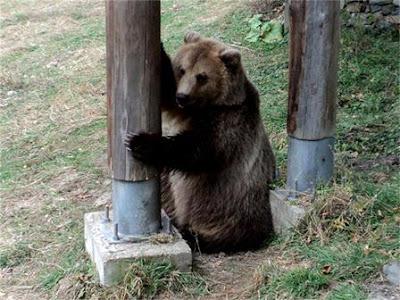 Парк танцуващи мечки Белица Рила