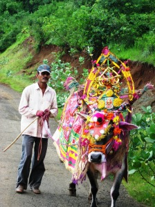 Local Farmer with his Bullock