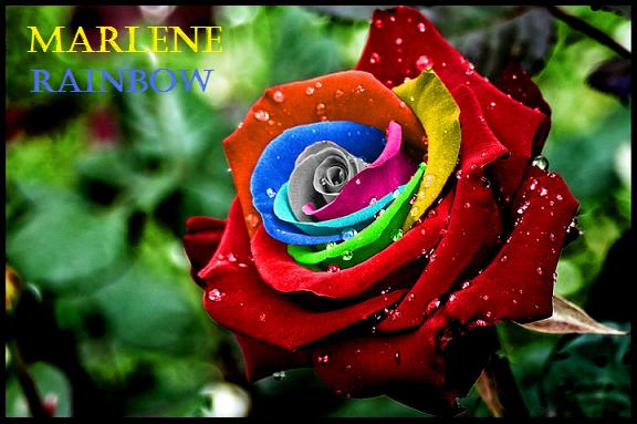 Blauwe Vloerbedekking Slaapkamer : Marlene Rainbow: januari 2012